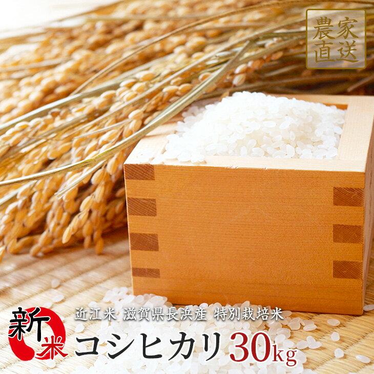 新米 コシヒカリ 30kg 令和2年産 近江米 滋賀県産