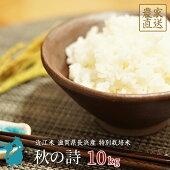 米秋の詩10kg近江米新米特別栽培米令和2年産滋賀県産【送料無料】