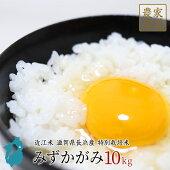 米みずかがみ10kg新米近江米令和2年滋賀県産【送料無料】