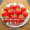 【送料無料】紅ほっぺ(いちご)2パック(12〜24粒)長野県・中野市産