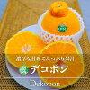 【送料無料】デコポン(みかん)優5L5kg(12玉)熊本県産