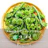 コゴミ・こごみ(山菜)