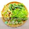 山菜セット(タラの芽、コシアブラ、コゴミ)