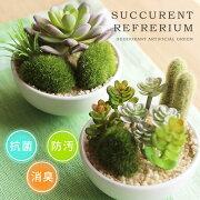 ポイント サキュレントリフレリウム アーティフィシャルグリーン デオドラント