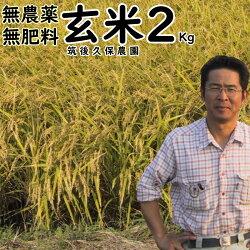 無農薬無肥料栽培米2Kg//玄米|福岡県産元気つくし筑後久保農園無農薬玄米自然栽培米