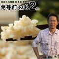 無農薬無肥料発芽前玄米2Kg 福岡県産夢つくし0.5分づき米筑後久保農園自然栽培米
