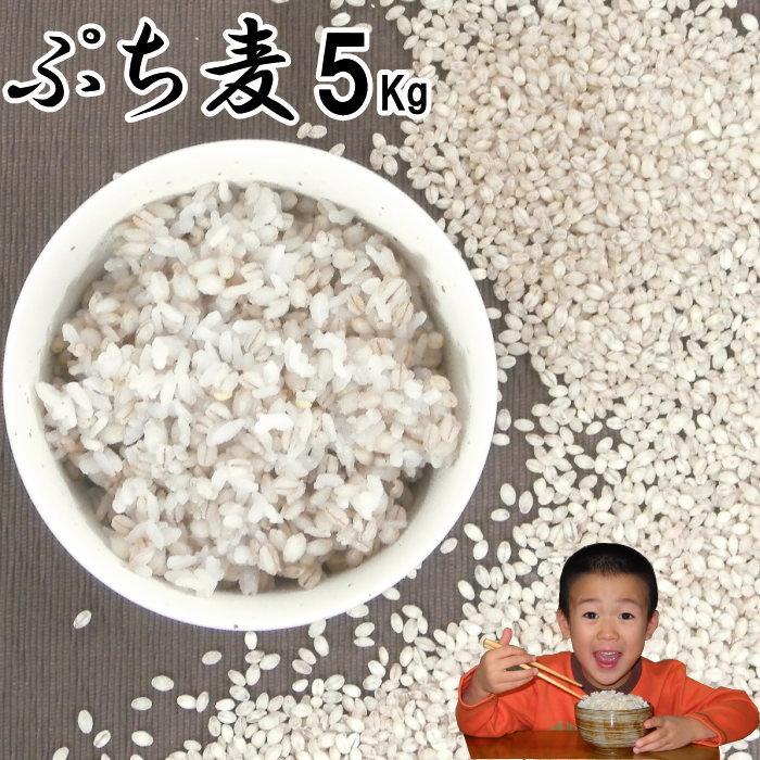 ぷち麦 5Kg 無農薬 大麦福岡県産筑後久保農園ご飯と一緒に炊いて麦ご飯味噌造り用丸麦