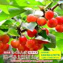 送料無料!福島県産 2種から選べるさくらんぼ 紅秀峰 紅てまり 2kg 3Lサイズ