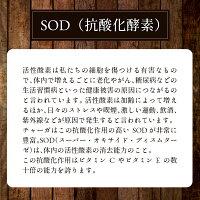 チャーガ健康園・樺宝寿ブロックおためし100g初回購入のみ