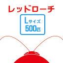お取り寄せ(3−4営業日) 餌昆虫 レッドローチL 500匹  代引き不可 冬季航空便地域発送不可 活餌 爬虫類 両生類 小動物