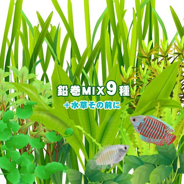 (水草)<br>水草鉛巻きMIX 9種+水草その前に(1個)! 前景〜後景までバランス良く揃ったオススメ商品です!<br><br>【水槽/熱帯魚/観賞魚/飼育】【生体】【通販/販売】【アクアリウム】<br>