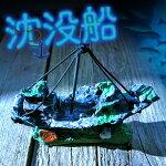 沈没船限定品【水槽/熱帯魚/観賞魚/飼育】【生体】【通販/販売】【アクアリウム】