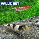 (エビ)【バリューセット】レッドチェリーシュリンプ(約1.5cm)(3匹) + ニュービーシュリンプ(約1.5cm)(5匹)【水槽/熱帯魚/観賞魚/飼育】…