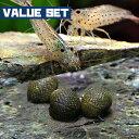 (エビ・貝)【バリューセット】ヤマトヌマエビ(約2-4cm)(5匹) + 石巻貝(約-cm)(10匹 ...