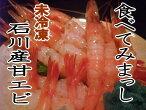 橋立/能登/金沢港直送!甘えび(生)刺身用25尾