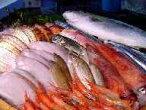 日本海の鮮魚