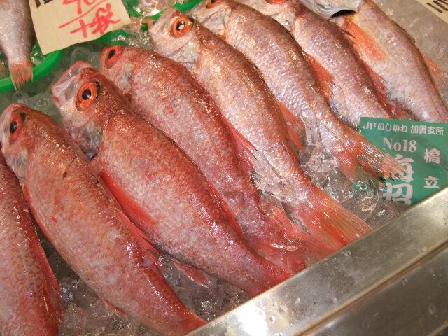 のどぐろ(日本海)約500g 1尾