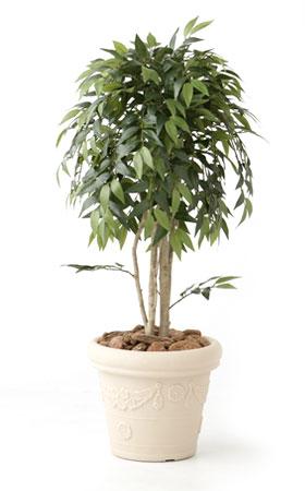無光触媒加工 人工植物 ラ・フランス 1.8m:ペットガーデン紀三井寺
