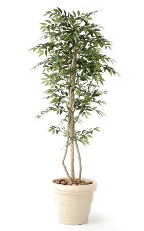 無光触媒加工 人工植物 フランスFi-G 1.8m:ペットガーデン紀三井寺