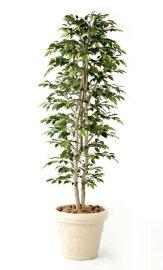 無光触媒加工人工植物ナターシャ・ニチーダ1.0m
