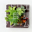 【midorie】ミドリエ 木目調スクエアフレーム/全2タイプ【壁掛け観葉植物】【ギフト/プレゼント】