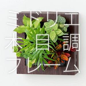 【ミドリエ midorie/木目調スクエアフレーム/全2色2タイプ】