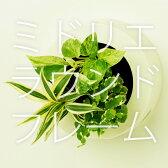 【midorie】ミドリエ ラウンドフレーム/全3色【壁掛け観葉植物】【ギフト/プレゼント】