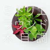【midorie】ミドリエ ラウンド木目フレーム/全2タイプ【壁掛け観葉植物】【ギフト/プレゼント】