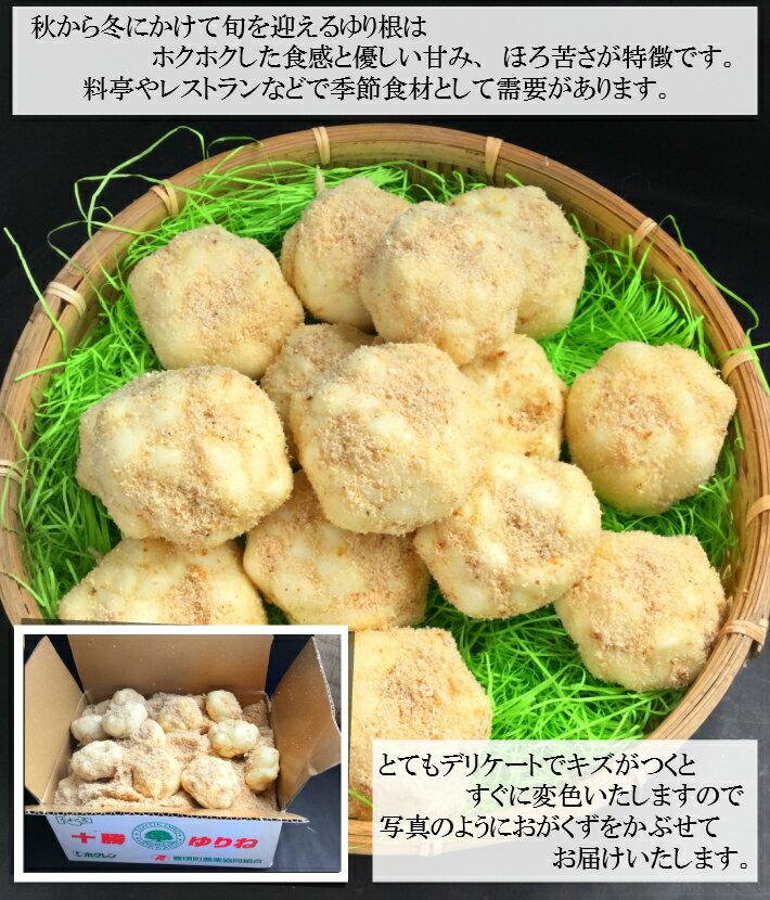 """北海道産""""ゆり根""""5~15玉入り約1kg入り1箱"""