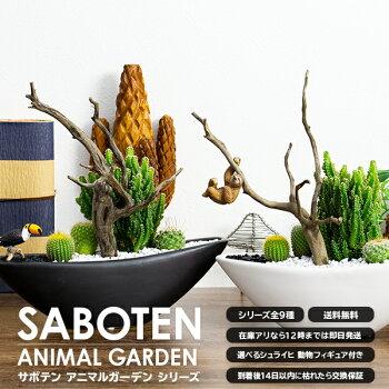 サボテン寄せ植えセレウス流木40種類から選べるシュライヒ動物フィギュアとセット