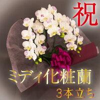 ミディ化粧蘭3本立〔白〕