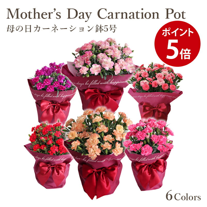 ★マラソン中P5倍★カーネーション鉢赤ピンクオレンジアプリコットパープル2色ピンク母の日プレゼント花フラワーギフト鉢植鉢選べる花色