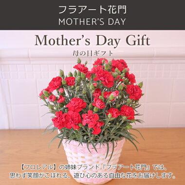 母の日、カーネーション鉢植