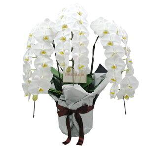 花 ギフト 誕生日 フラワー 送料無料 花束 コチョウラン 胡蝶蘭 結婚祝 お祝い 御祝 記念日 プ...