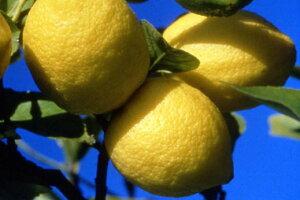 レモンオ−ガニック