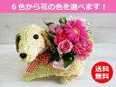 【送料無料】【画像配信OK】 ミルキーわんこJr 母の日 犬...