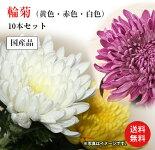 輪菊10本
