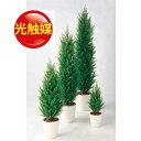人工観葉植物  光触媒 ゴールドクレスト GREEN 150 (器:R...