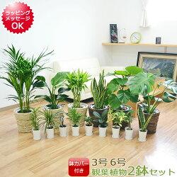 選べる観葉植物2鉢セット 6号3号 鉢カバー付き(6号のみ)