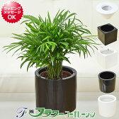 【送料無料】ミニ観葉植物 テーブルヤシ ハイドロカルチャースタイリッシュ陶器鉢付き