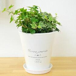 アイビー3種ブリキポット寄せ植え