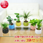【送料無料】ミニ観葉植物ハイドロカルチャー陶器鉢付き3鉢セット