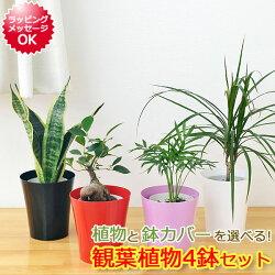 選べる観葉植物鉢カバー付き4鉢セット