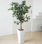 人工観葉植物ベンジャミンロングスクエア陶器鉢