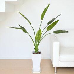 人工観葉植物 ストレリチア・レギネ 陶器鉢