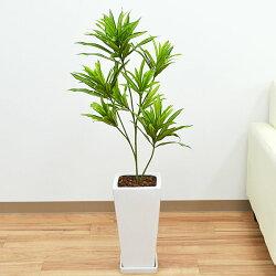 人工観葉植物 ドラセナ・ソングオブジャマイカ 陶器鉢