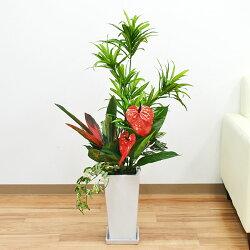 人工観葉植物 寄せ植え(ドラセナ・ソングオブジャマイカ) 陶器鉢