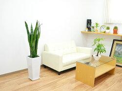 観葉植物サンスベリア・ゼラニカロングスクエア陶器鉢植えBIGサイズ設置イメージ