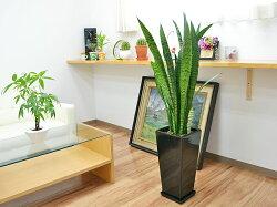 観葉植物サンスベリア・ゼラニカロングスクエア陶器鉢植えBIGサイズブラック陶器鉢