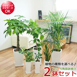 【送料無料】観葉植物 7号4号 陶器鉢植え 2鉢セット